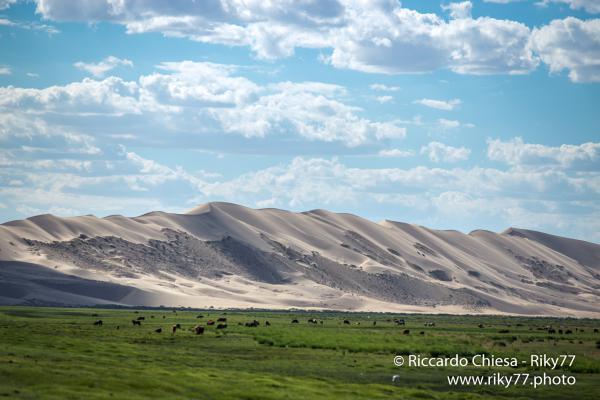 Khongryn Els - Gobi desert